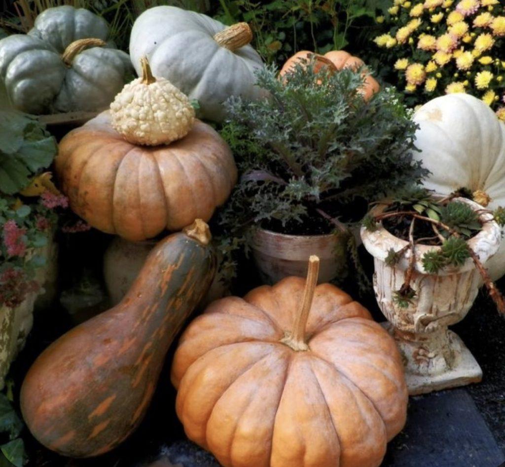 An assortment of pumpkins thanksgiving